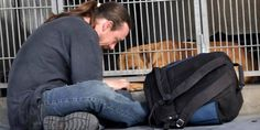 Dave Thomas San Bernardino Man Gets Dog Back After Stranger Takes Heartbreaking Photo At Animal Shelter Animal Shelter, Animal Rescue, Dave Thomas, Kindness Of Strangers, Dog Water Bowls, Emotional Photos, Refuge, Getting Him Back, Homeless Man