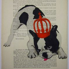 French Bulldog.
