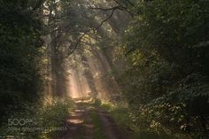 Light rays in summer forest