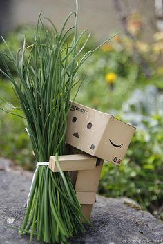 Danbo very proud of his chives crop