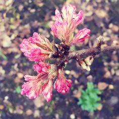 #spring #lente #bloem #flower #natuur #nature