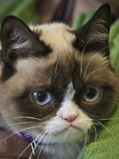 Grumpy Cat - I just can't get enough of that Grumpy face !!!