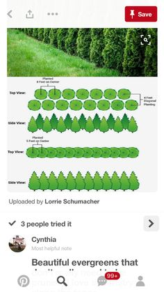 Leland cypress - how to plant double row Privacy Trees, Privacy Plants, Garden Privacy, Backyard Privacy, Privacy Hedge, Planting For Privacy, Arborvitae Landscaping, Farm Landscaping, Privacy Landscaping