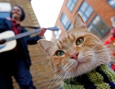 Bob the Street Cat & James Bowen, a Beautiful Friendship in the Streets of London
