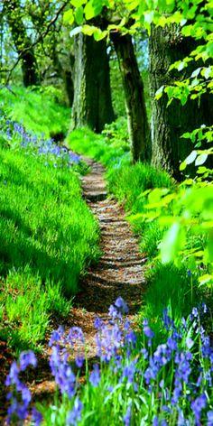 ~ a perfect hiking trail ~