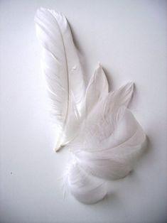 sweetlysurreal:  http://adelaandtessie.blogspot.com/