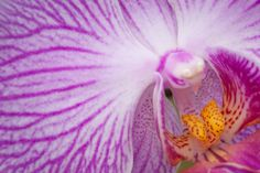 Tips for Extreme Flower Closeups, Even in Winter
