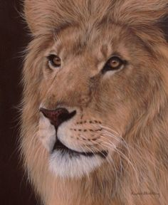 African Lion painting by Rachel Stribbling