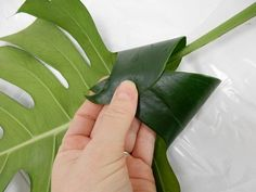 Fold the leaf lobe over and secure with glue