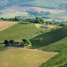 Tuscany isn't the only region where Sangiovese thrives – Romagna is home to dozens of excellent wines made from the noted wine grape. Brunello Di Montalcino, Italian Dishes, Cabernet Sauvignon, Wine Making, Under The Sea, Italy Travel, Tuscany, Wines, Seaside