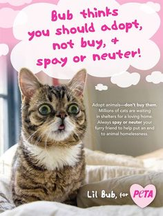 Lil Bub ad for PETA