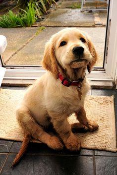 One expressive puppy!