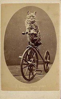 Grandpa LOLCat rides a bike