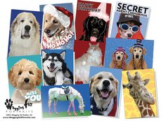 Some examples of our cards, both our Wet Nose Greetings and some of our Thats Your Pet winners.