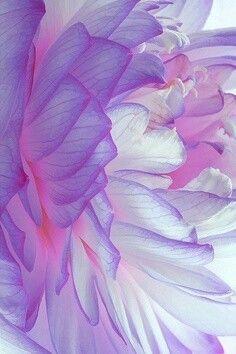 She loves purple