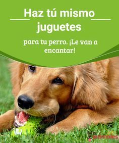 They will love it - perros - All About Animals, Animals And Pets, Cute Animals, Dog Training Techniques, Pets 3, Chihuahua Love, Ideas Originales, Dog Toys, Cute Dogs