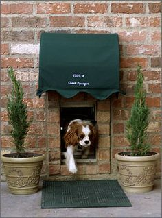 Thought there was no such thing as a trendy dog door? you can frame the new dog door with brick to achieve a pet-pleasing portal that fits in seamlessly with your exposed brick home. King Charles Spaniel, Cavalier King Charles, Pet Door, Doggy Doors, Diy Doggie Door, Dog Rooms, Dog Houses, House Dog, Dog Design