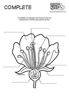 Flowers - Parts of a Plant Worksheet 1 | Botany Education | Science ...
