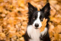Autumn by TerkaLoty.deviantart.com on @deviantART