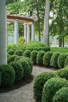 "ColdClimateGardenings: flowersgardenlove: "" Box hedges Beautiful gorgeous pretty .."