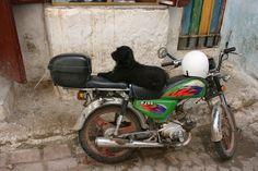 Motorcycle Dog - Fes Medina