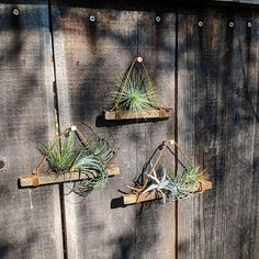 Set of Three Hanging Wood & Cotton Cord Air Plant Holders