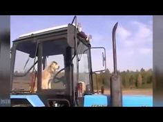 Thug Life   Best Thug Life compilation Episode 19   Funny videos 2015