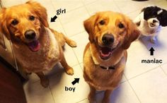 Quiz: Can You Tell Dog's Gender Just By Looking At Their Face? #topangapetresort