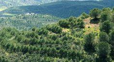Parque Natural do Sudoeste Alentejano e Costa Vicentina — ICNF