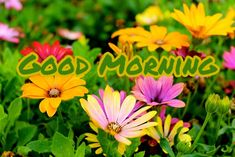Good Morning Flowers Images 2020 - Best New Collection Lovely Good Morning Images, Latest Good Morning Images, Good Morning Images Download, Good Morning Flowers, Good Night Image, Good Morning Wishes, Cute Rose, Most Beautiful Flowers, Flower Images