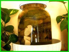 Umyjeme přerostlé okurky, vinné listy, kopr a kořen křenu. Okurky propícháme, skládáme je do velikých sklenic (nebo kameninové nádoby – viz foto)...
