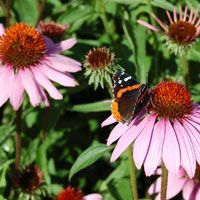 Tips for flowers that are best-suited for seed saving.