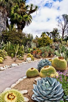 Desert gardens have a marvelous, rather unearthly look... Love this Cactus Garden, Huntington Library, San Marino, CA ~~ Houston Foodlovers Book Club