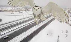In het Canadese Montreal houden bewakingscamera's de wegen in de smiezen. Die beelden zijn door het prachtige sneeuwdek hartstikke mooi.