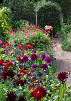 Dahlia displays at Perch Hill c. Jonathan Buckley
