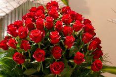 Kırmızı+Güller