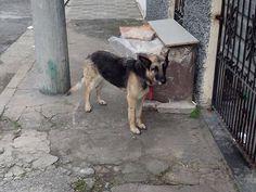 SOS Pet: cachorrinha abandonada ganha família nova no Domingo Show - Fotos - R7 Domingo Show