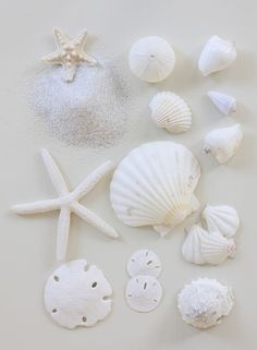 Paleta de blancos, no todos los blancos son iguales.  #blanco #caracolas #conchas