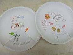 Life cycle plates