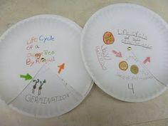 Life cycle plates