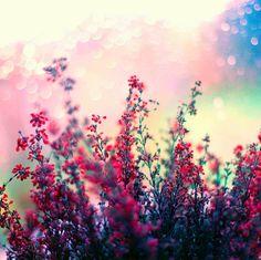 flowers weheartit - Hľadať Googlom