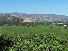 Carolyn Stearns Storyteller- Napa  Valley CA. from Chanticleer Winery/ Morningside Vineyard