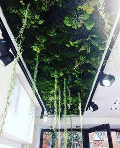 Plant ceiling for shop fittings Paris – – - New Site