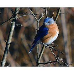 Bergen County Led Audubon Walks - Bird Watching! Teaneck, NJ #Kids #Events