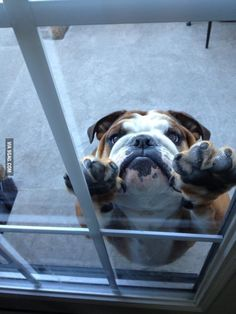 Let me in please.