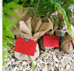 Pine tree seedlings wrapped in burlap and tagged with care instructions waited for guests.