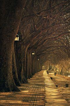 """Lantern Walk"" Ponte de Lima, Portugal  Mark Crosling"