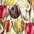 Early Tulips Curtain Fabric A fabulous design of large tulips in aubergine, yellow and red, taken from a 1929 fabric Cotton Curtains, Floral Curtains, Curtain Fabric, Vintage Floral, Guest Room, Tulips, Room Ideas, Textiles, Cool Stuff