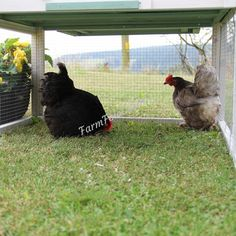 The Amy Chicken Coop with Run – Farm Fowl Chicken Coop Run, Coops, Amy, Ireland, Pets, Chicken Coops, Hens, Animals And Pets