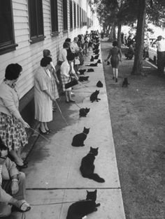 "Owners with Their Black Cats, Waiting in Line For Audition in Movie ""Tales of Terror"" Photographic Print by Ralph Crane at Art.com"